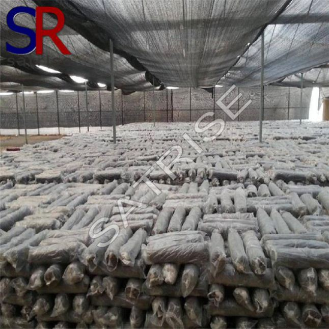 Hot selling cultivating fresh good service mushroom seed