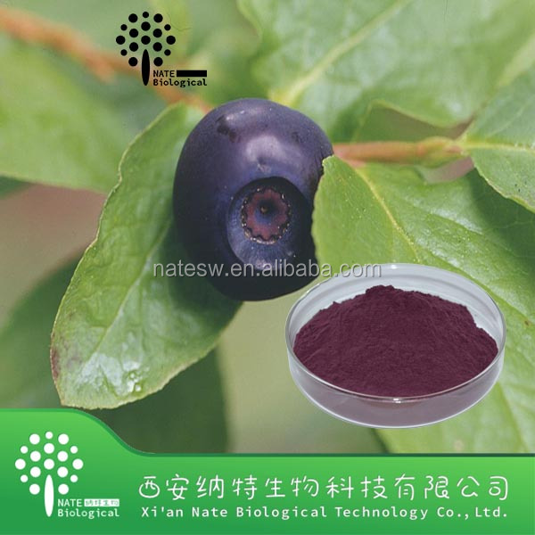 High quality factory price large inventory Professional Vaccinium uliginosu extract bilberry fruit P.E.extract manufacturer