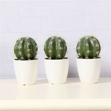 Best seller OEM quality foam mini echinopsis tubiflora indoor pot plants