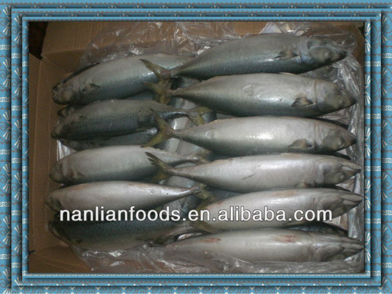 fishing trawlers mackerel for sale 300-500g