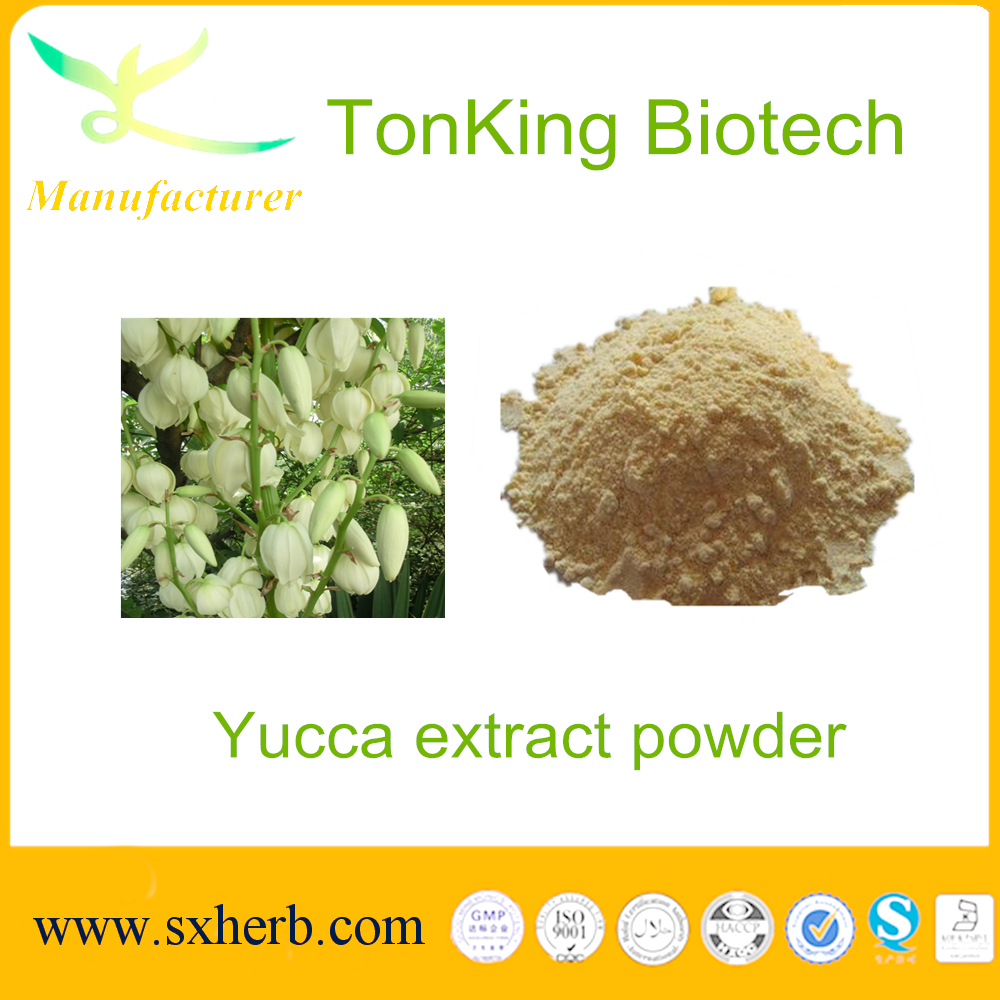 TonKing Supply Best Yucca extract powder