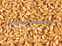 Indian Wheat (Whole grains)