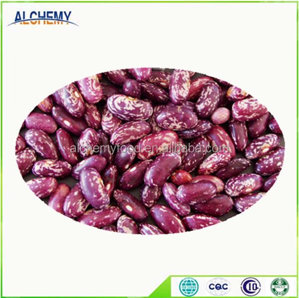 Free Sample Light Speckled Kidney Beans Buy White Kidney