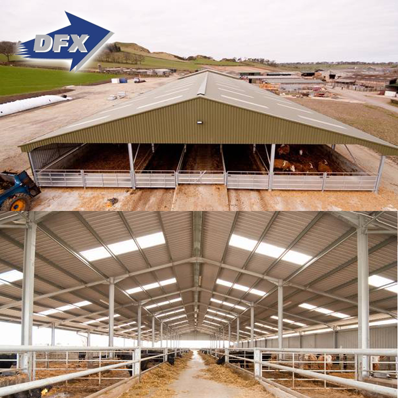 Shed Design Farming House Light Frame Steel Structure Prefabricated Dairy Farm Sheds Buy Dairy Farm Sheds Prefabricated Dairy Farm Sheds Light Frame