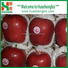 Fresh huaniu apple exporter