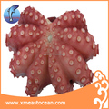 IQF frozen cooked octopus whole round