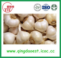 Fresh healthy natural nomal white garlic
