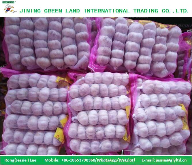 FRESH CHINA GARLIC PRICE TO LEBANON MARKET