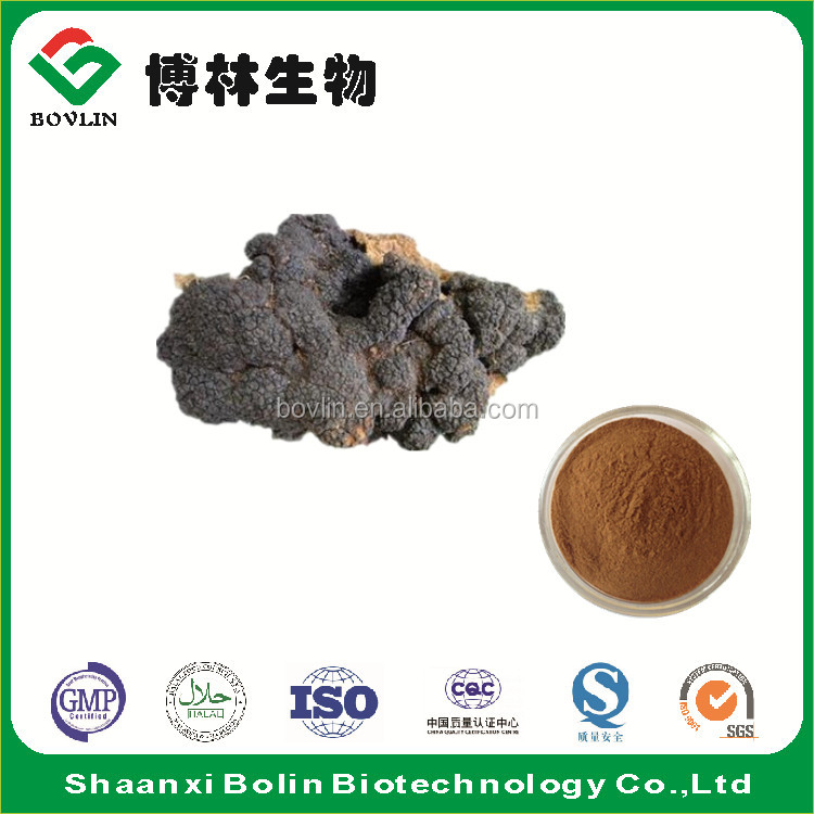China Chaga Mushroom Extract Powder Manufacturer Supplier Plant