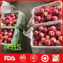 apple within 18kg carton chinese yantai fuji apple bulk apples