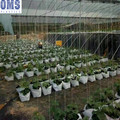 Plastic Plant Bags for Agriculture Farming Use