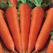Fresh Carrot India/Fresh New Crop 2016 Carrot
