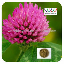 Free sample ! China 16 years experience factory organic herbal powder Trifolium pratense extract ,red clover extact isoflavones
