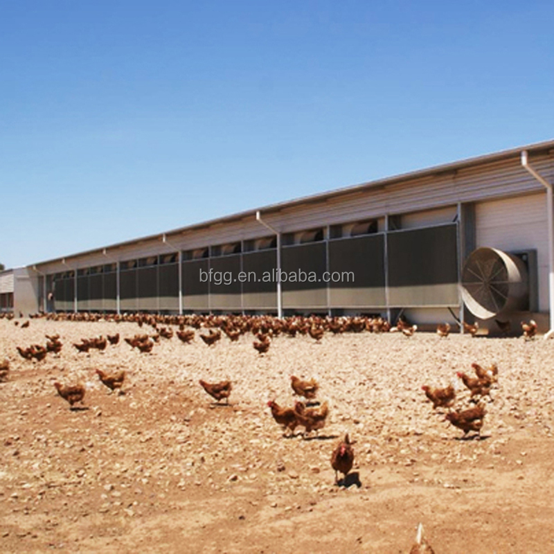 Good quality steel structure sport halls fiberglass chicken house