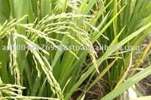 White Long Grain Rice and Parboiled ~ Special PRICE CIF West Africa