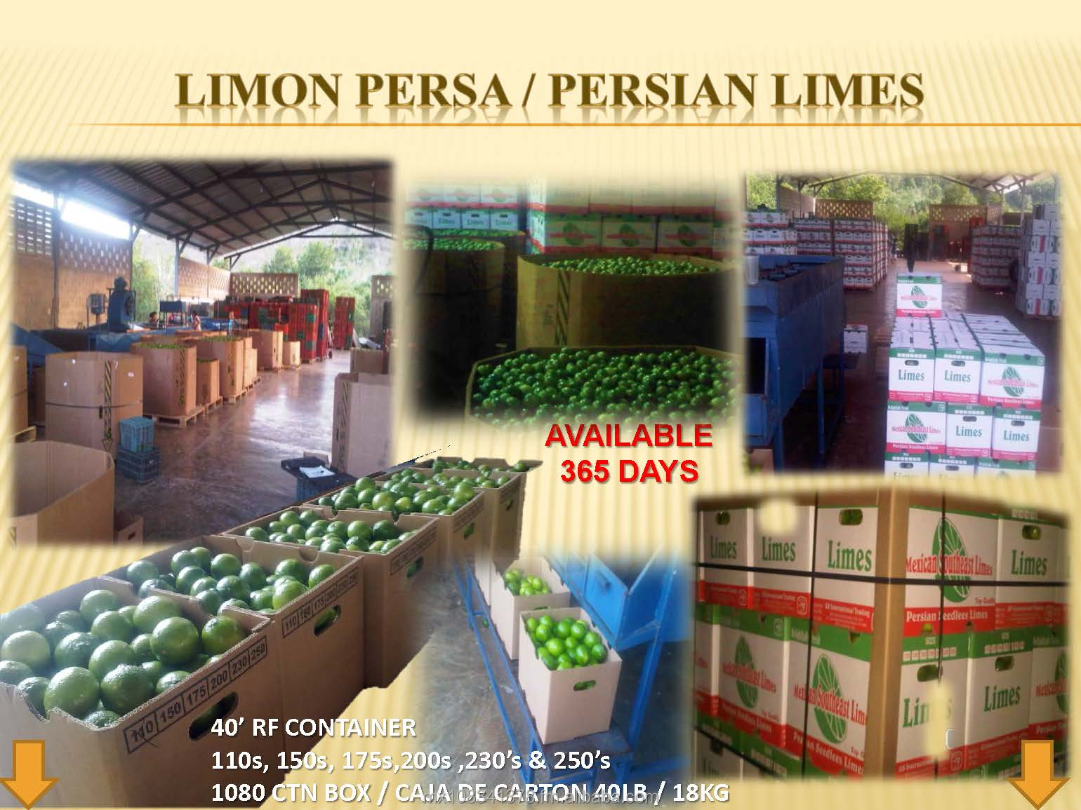 PERSIAN LIMES FROM MEXICO