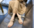 2019 China most popular new design Roman style flat women outdoor with decoration slipper