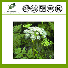Dong Quai / Angelica sinensis Extract 1% Ligustilide
