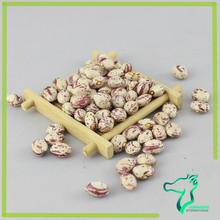Xinjiang Round Light Speckled Kidney Beans For Kidney Buyer