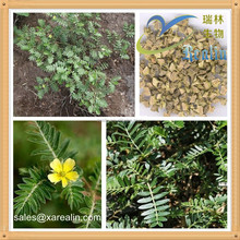 Aromatic Raw Material Tribulus Terrestris Extract Powder, Fragrance Tribulus Terrestris Extract