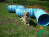 outdoor dog tunnel to train dog aglity, pet tunnel