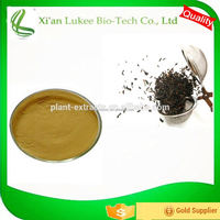 Black Tea Extract 40% Theaflavine (HPLC) Camellia sinensis