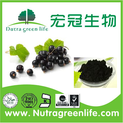 Natural Bilberry Extract blueberry elderberry blackcurrant anthocyanidins Violet Fine Powder