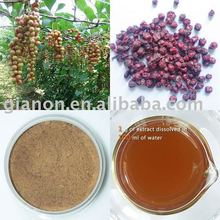 Schisandra fruit juice concentrate powder