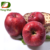 10% 20% 40% 50% 70% polyphenols apple fruit extract
