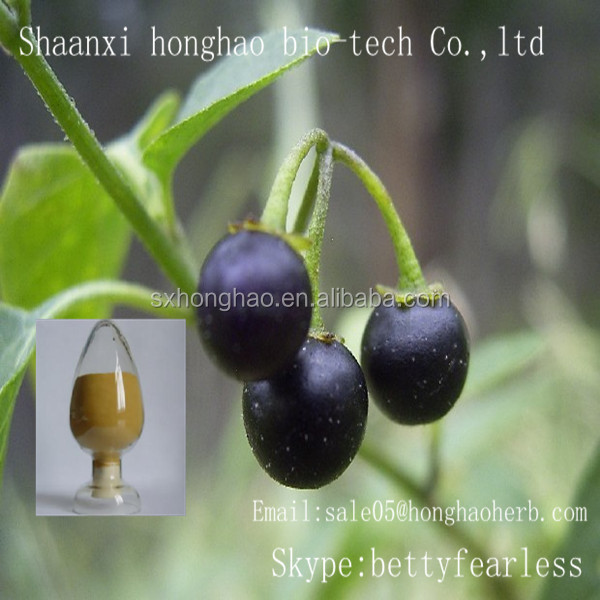 Plant extract powder China supplier Belladonnae Extract