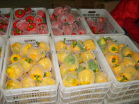 Fresh bell pepper/fresh sweet pepper/yellow bell pepper