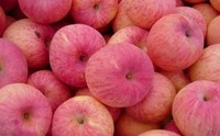 2015 Wholesale High Quality fresh apple fruit price