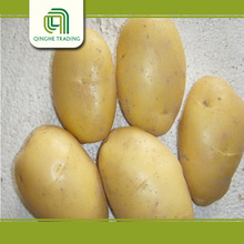 Professional wholesale bulk potato specifications for wholesales