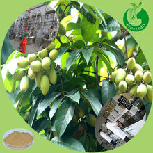 High quality olive extract/olive fruit extract/natural olive leaf extract