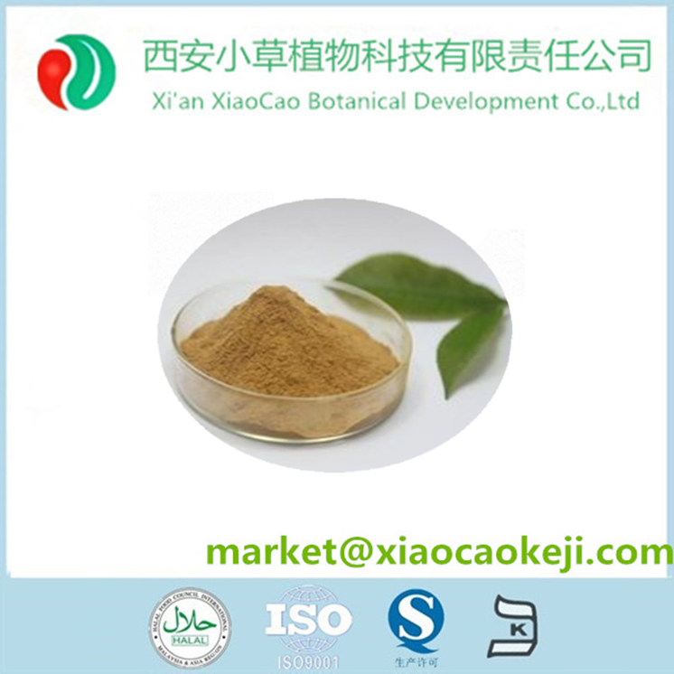 Sting Nettle root/leaf/seed extract powder