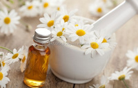 Best Quality Chamomile Oil