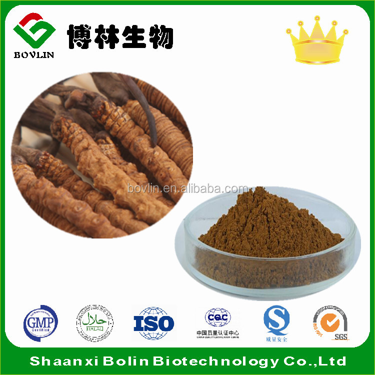 Pure Natural Cordyceps Sinensis Mycelium Extract / 10%-50% Polysaccharide