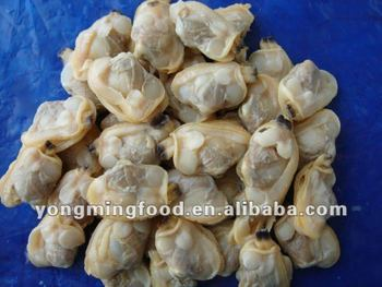 frozen and boiled short necked clam meat