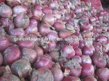fresh red onions factory