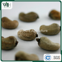 Factory Price Asia Cashew Kernel with Shell