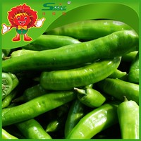 High Quality Fresh Green pepper Frozen transportation Sweety red chilli