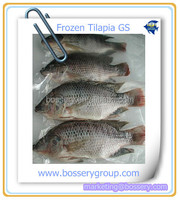 Farm Raised Frozen Fresh Tilapia GS Fish