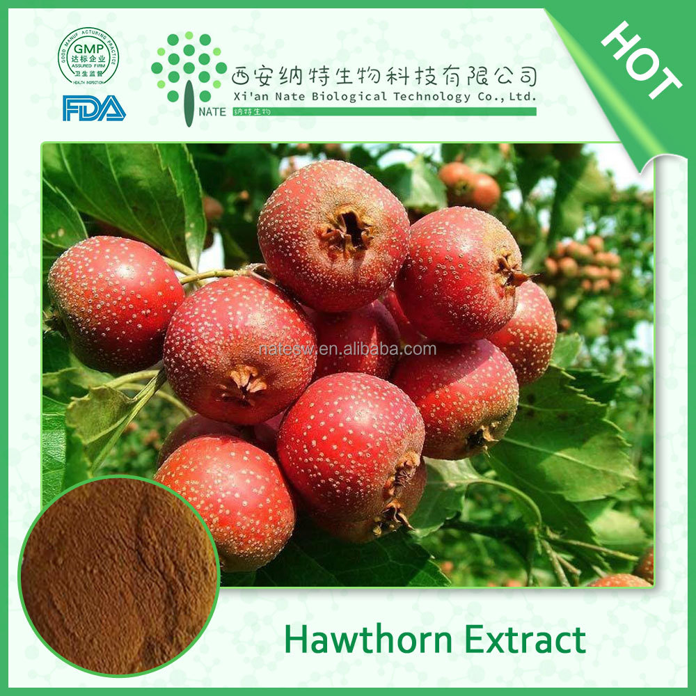 New Products Herb Extract 100% Pure Hawthorn Extract in factory price
