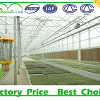 Mutil Span Greenhouse Used Greenhouse Agriculture