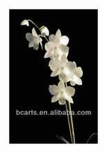 High quality pure hand-painted oil paintings home decoration white orchid flower painting