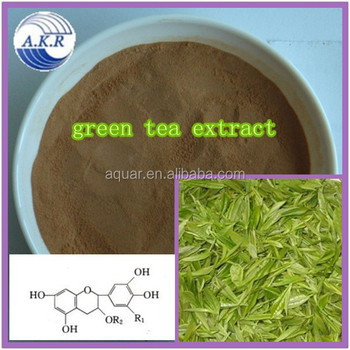 Chinese green tea , Matcha powder polyphenols 20%~98% imrpove immune system free sample