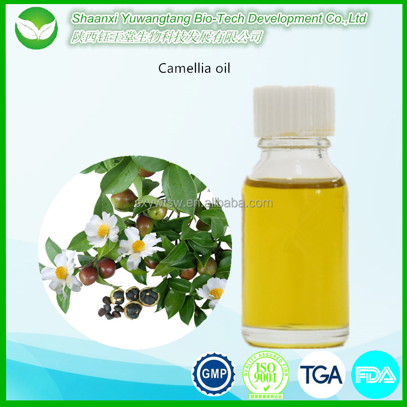 Manufacturer supply high quality green tea seed oil