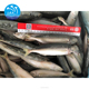 Sea Frozen Horse Mackerel