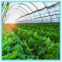 Manufacturer Agriculture poly tunnel PE PVC green house
