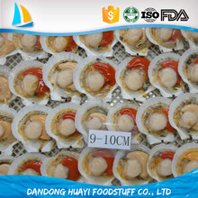 Frozen Cooked Scallop in Shell